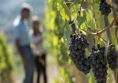 Anche il vino diventa sostenibile, già 500 aziende aderenti