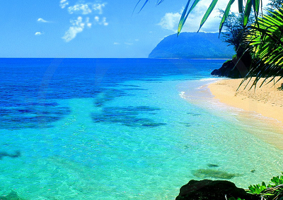 Dalle Hawaii elisir alchemico naturale, organico e anti-età