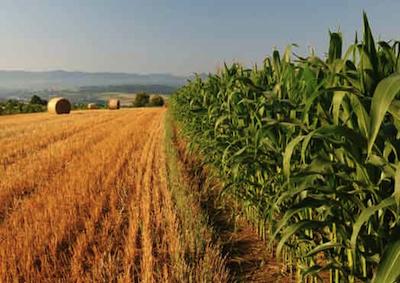 L'agricoltura fa salire del 7,1% il numero degli occupati