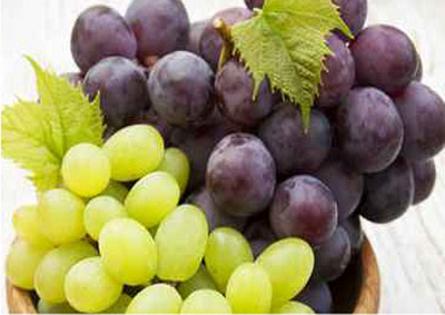 Vino, MIPAAF registra 10 vitigni resistenti alle malattie