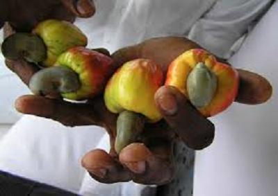 Con COOPI anacardi semi del cuore contro la povertà