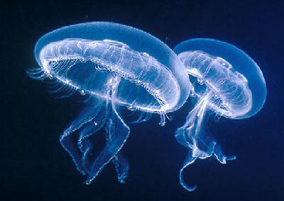 CNR: cibo del futuro, presto in cucina meduse, alghe, insetti