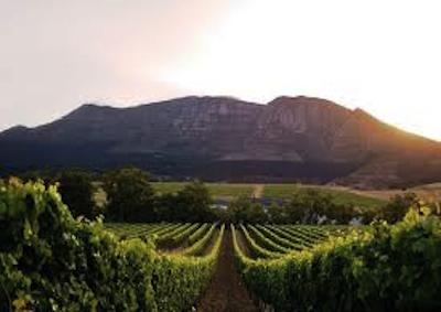 Ambasciata Sud Africa a Roma presenta i suoi vini di qualità