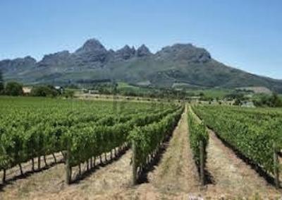 Vino: per quantità peggior annata di sempre in Toscana, meno 40%