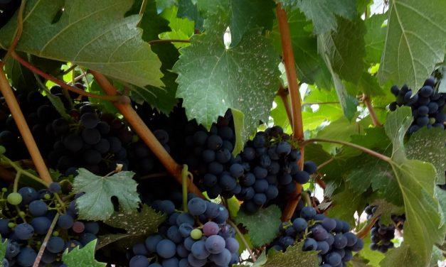 Ecoturismo e Donne del Vino: soste in camper con vista vigna