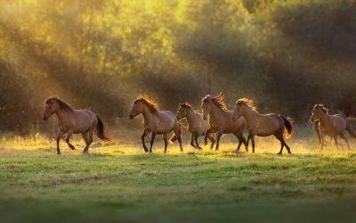 In Grecia legge che vieta la macellazione dei cavalli