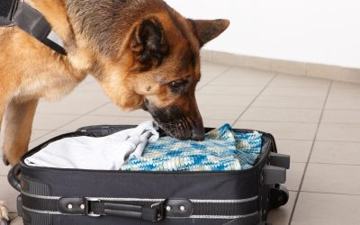 UAE police dogs detect Covid-19 at Dubai airport