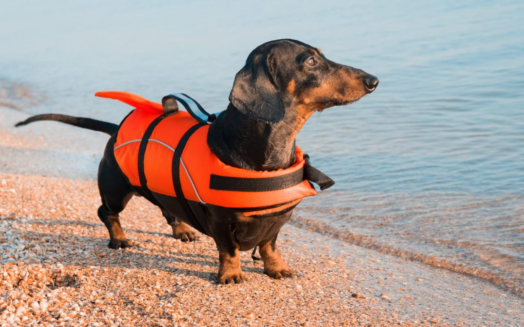 Palm West Beach: the place where you can take your four-legged with you